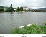 Swans at Bernkastel-Kues on the Mosel River
