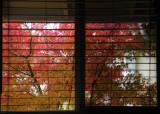 Through the Kitchen Window