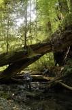 Hiking in the creek