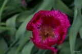 2012-04-22 Morels 034.JPG