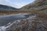 Icy marsh