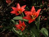 spring_11