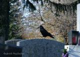 Zentralfriedhof 005.jpg