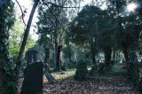 Zentralfriedhof 018.jpg