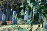 Zentralfriedhof 022.jpg