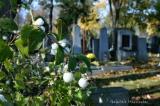 Zentralfriedhof 146.jpg