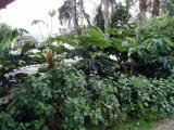 Tropical and subtropical regions