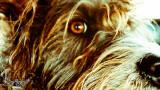 ©UliStich August 02, 201211439.jpg