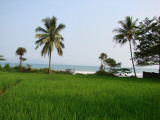 Persawahan di Banten Selatan