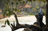 Karang Taraje dr Pulau Manuk