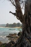 Pohon Tua di Pantai Pulau Manuk