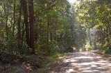 hutan menuju Pantai Sawarna