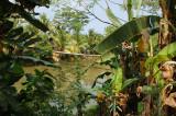 Jembatan Gantung menuju Tanjung Layar Sawarna