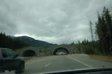 Animal Crossing in Banff