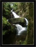Waterfall in Hilo