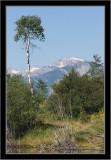 Grand Teton NP Moose Pond