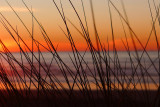 Sunset through the dune grasses