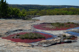 Bradley Peak: Davidson-Arabia Mountain Nature Preserve