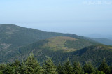 View of grassy balds atop Roan Highlands