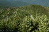 Road to Mt. Mitchell summit