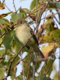 Carter's Lake area birds: 2011-2012