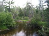 Au Sable River: Crawford Co., MI