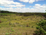 Open grassland/savannah: Crawford Co., MI