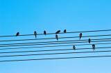 Morning melody