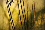 Five Bamboo