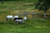 wet mountain horses