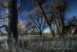 kiowa creek cottonwoods