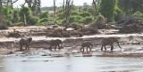 WILD KENYA - ELEPHANTS FEBRUARY 2012