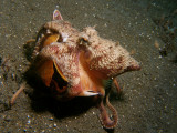 Kokosnoot-octopus1.JPG