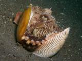 Kokosnoot-octopus3.JPG
