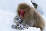 SnowMonkeysWeb-12.jpg
