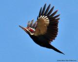 Tidal Falls Woodpeckers