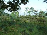 Cerulean Warbler Reserve / RNA Reinita Cielo Azul