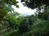 Cerulean Warbler Reserve / RNA Reinita Cielo Azul 2