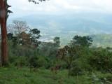 Cerulean Warbler Reserve / RNA Reinita Cielo Azul 3