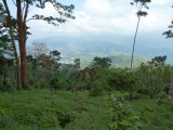 Cerulean Warbler Reserve / RNA Reinita Cielo Azul 4