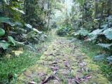 The often slppery Lengerke Trail at Cerulean Warbler Reserve / RNA Reinita Cielo Azul