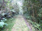 Lengerke Trail 3 Cerulean Warbler Reserve / RNA Reinita Cielo Azul