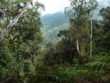 View from ridge at Cerulean Warbler Reserve / RNA Reinita Cielo Azul