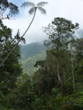 View from ridge 2 at Cerulean Warbler Reserve / RNA Reinita Cielo Azul