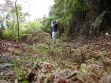 Striking a pose at Cerulean Warbler Reserve / RNA Reinita Cielo Azul