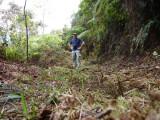 Striking a pose 2 at Cerulean Warbler Reserve / RNA Reinita Cielo Azul