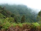View form end of trail - Cerulean Warbler Reserve / RNA Reinita Cielo Azul