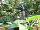 Striking a pose - Helmeted Curassow Reserve / RNA Pauxi Pauxi