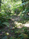 Path through forest - Helmeted Curassow Reserve / RNA Pauxi Pauxi