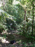 Path through forest 2 - Helmeted Curassow Reserve / RNA Pauxi Pauxi